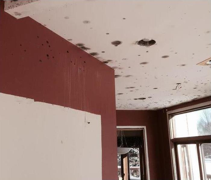Mold contamination on ceiling